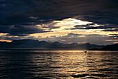 Alaska, Frederick Sound, Humpback Whale (Megaptera novaeangliae) fluke distance A50F