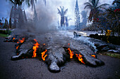 Hawaii, Big Island, Kilauea Volcano, Kalapana active lava flow over road A28F