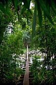Hawaii, Maui, Waihee, A swinging Bridge into a lush green forest.