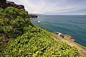 Hawaii, Maui, lush West side coast looking North