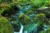 Hawaii, Maui, Iao Valley, Beautiful lush stream flowing over mossy rocks.