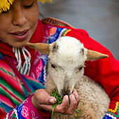 'A Girl Feeds A Small Goat; Cusco Peru'