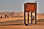 Dromedary down a water tank, Morocco