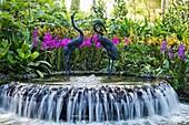 Singapore,Botanic Gardens,Orchid Gardens