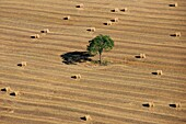 France, Landscape harvested grain field with haystacks, tree in the center of the image (aerial photo)