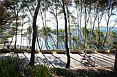 Coastal road through pine tree forest, leading to S'Illot chapel, view over Playa S'Illot beach, Alcudia peninsula, bay of Pollenca, Mallorca, Balearic Islands, Spain