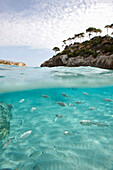 Shoal of fish at Cala S' Amonia, south east coast, Mallorca, Balearic Islands, Spain