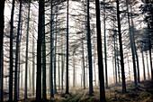 bosque, arboles, naturaleza, inspiración, forest, trees, nature, inspiration