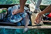 fisherman, Grullos keys, San Blas Islands also called Kuna Yala Islands, Panama.