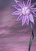 Close up of purple flower. Made up flower