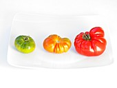 Stages of ripening of tomatoes