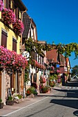 adorned, Alsace, architecture, Bas-Rhin, blue, building, charming, color image, construction, cultural, culture, day, decorative, dwelling, Europe, facade, flower, frame, France, half-timbered, heritage, historic, holiday, house, idyll, idyllic, itterswil