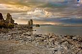 Tufa deposits and columns and their flora on the lakeside of Mono Lake