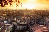 Cityscape of Lucca from Guinigi Tower, Lucca, Tuscany, Italy