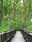 A raised wooden walkway for visitors at Tanjung Piai National Park