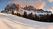 Low evening sun above the peaks of the Geisler mountain range with Swiss pine trees in the foreground in winter, Villnoess Valley, Dolomites, Italy