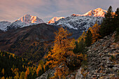 Picturesque sunrise above the Ortler mountain range with its summits Königspitze (3859 m), Monte Zebru (3735 m) and Ortler (3899 m) in autumn, South Tyrol, Italy