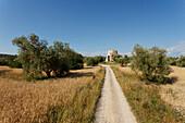 Feldweg durch Felder und Olivenbäume, Chiesa di San Bruzio, Ruine der Kirche, 11. Jhd., bei Magliano in Toscana, Toskana, Italien, Europa
