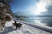Man sitting on a bench at snow-covered lakeside promenade, lake Kochel, Kochel, Upper Bavaria, Germany