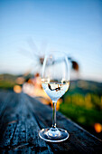 A glass of white wine, Styria, Austria