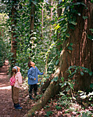 PERU, Amazon Rainforest, South America, Latin America, two children looking at tree in Tambopata National Reserve