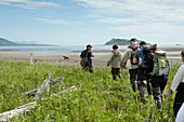 ALASKA, Homer, a group of hikers spot a grizzly (brown) bear, Katmai National Park, Katmai Peninsula, Hallow Bay, Gulf of Alaska