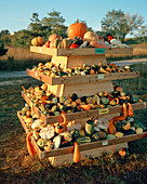 AUSTRIA, Rust, produce for sale on a roadside stand, Burgenland