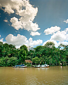 BRAZIL, Belem, South America, boats moored by trees on river, Rio Guajara