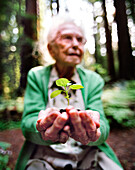 USA, California, senior woman holding seedling in redwood forest