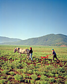 USA, California, women Organic farmers with horse plowing field, For Jones