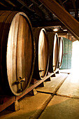 USA, California, Sonoma, Buena Vista Carneros winery, wine barrels in the oldest premium winery, a cave built in 1857