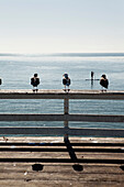 USA, California, Malibu, seagulls sit on a railing on the pier at Paradise Cove, a man passes by on his paddleboard
