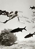 CAYMAN ISLANDS, Caribbean, two freedivers and Tarpon, underwater, Grand Cayman (B&W)