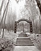 CHINA, Hangzhou, entrance shine and steps amid bamboo forest, Meijai Wu (B&W)