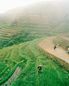 CHINA, elevated view of farmers working in field, Dragon Backbone Rice Terraces