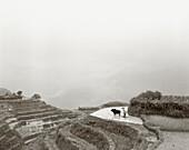 CHINA, famer and water buffalo in rice paddy, Dragon Backbone Rice Terraces (B&W)