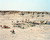 ERITREA, Foro, Bedouin herders tend to their livestock in the desert