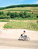 FRANCE, Burgundy, young woman riding bicycle by vineyard, elevated view, Burgundy