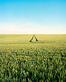 FRANCE, Burgundy, wheat field against clear sky, Chablis