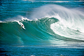 USA, Hawaii, surfer dropping into a large wave on the North Shore, Eddie Aikau surfing competition, Waimea Bay