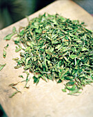 INDIA, West Bengal, green tea leaves, Ambooti Tea Gardens, Darjeeling