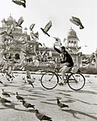 INDIA, Jaipur, man riding bicycle through a flock of pigeons (B&W)