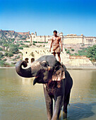 INDIA, Jaipur, man on elephants back in river in front of the Amber Palace