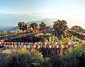 INDIA, West Bengal, colorful prayer flags hanging over trees, Tiger Hill