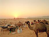 INDIA, Rajasthan, men and camels at the Pushkar Camel Fair