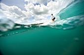 INDONESIA, Mentawai Islands, Kandui Resort, young man surfing on wave, Beng Beng