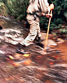 PANAMA, Cana, a man crosses a stream with a walking stick in the Darien jungle near the Cana Field Station close to the Colombian Boarder, Darien Jungle, Central America