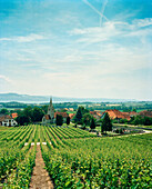 SWITZERLAND, Bonvillars, vines and church in the small town of Bonvillars, Jura Region