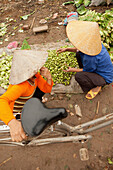 VIETNAM, Hanoi, Countryside, women sell produce at a road side market in Thanh Bac Ninh