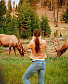 USA, Wyoming, tourist photographing elk, Yellowstone National Park